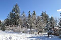 Χιονισμένο SAN Bernardino Mountain Forest Στοκ Φωτογραφίες