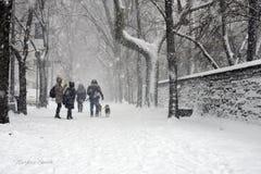 χιονοθυελλών στοκ εικόνες