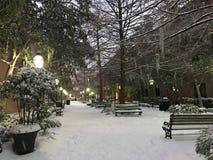 Χιονοθύελλα στο Τσάρλεστον, Sc Στοκ εικόνα με δικαίωμα ελεύθερης χρήσης