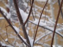 χιονοπτώσεις διακοπτών Στοκ φωτογραφίες με δικαίωμα ελεύθερης χρήσης