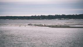 χιονοπτώσεις κοντά στη θάλασσα το χειμώνα με τα άσπρα κύματα που συντρίβουν - τρύγος Στοκ φωτογραφία με δικαίωμα ελεύθερης χρήσης