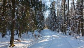 Χιονοπτώσεις μετά από το crosing δάσος επίγειων δρόμων στον ήλιο Στοκ φωτογραφίες με δικαίωμα ελεύθερης χρήσης