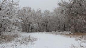 Χιονοπτώσεις σε ένα πάρκο με τα χιονισμένα δέντρα απόθεμα βίντεο