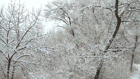 Χιονοπτώσεις σε ένα χειμερινό πάρκο με τα δέντρα χιονιού απόθεμα βίντεο