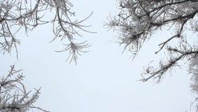 Χιονοπτώσεις σε ένα χειμερινό πάρκο με τα χιονισμένα δέντρα απόθεμα βίντεο
