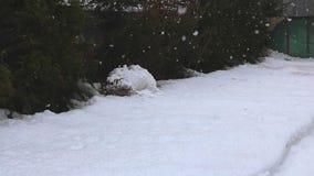 Χιονοπτώσεις στο δασικό πάρκο Χειμερινό τοπίο στο χιονισμένο πάρκο βαριές χιονοπτώσεις ορών απόθεμα βίντεο