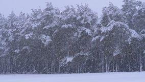 Χιονοπτώσεις στο δάσος χειμερινών πεύκων με τα χιονώδη χριστουγεννιάτικα δέντρα κίνηση αργή φιλμ μικρού μήκους