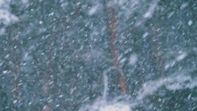 Χιονοπτώσεις στο δάσος χειμερινών πεύκων με τα χιονώδη χριστουγεννιάτικα δέντρα κίνηση αργή απόθεμα βίντεο