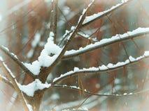 Χιονοπτώσεις στο δάσος Στοκ Εικόνες