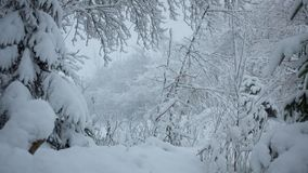 Χιονοπτώσεις στο δασικό πάρκο Χειμερινό τοπίο στο χιονισμένο πάρκο απόθεμα βίντεο