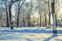 Χιονοπτώσεις στο πάρκο πόλεων το πρωί Στοκ Εικόνες