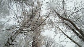 Χιονοπτώσεις στο χειμερινό δασικό χιόνι που πέφτει άφθονο πέρα από το δάσος φιλμ μικρού μήκους