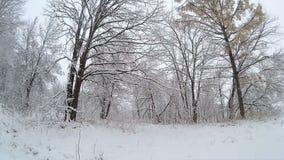 Χιονοπτώσεις στο χειμερινό δασικό χιόνι που πέφτει άφθονο πέρα από το δάσος απόθεμα βίντεο