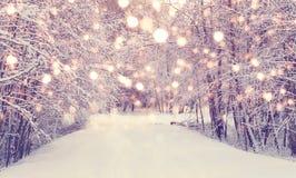 Χιονοπτώσεις Χριστουγέννων στο πάρκο Στοκ Φωτογραφία