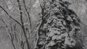 χιονοπτώσεις φιλμ μικρού μήκους