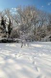 χιονοπτώσεις Στοκ εικόνες με δικαίωμα ελεύθερης χρήσης