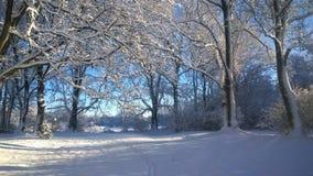 χιονοπτώσεις Στοκ Φωτογραφίες