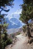 Χιονοσκεπή αιχμή και δάσος στα βουνά του Ιμαλαίαυ, περιοχή Annapurna, του Νεπάλ Στοκ Εικόνα
