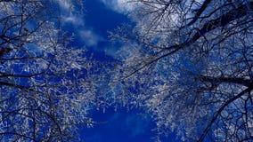 Χιονώδεις κλάδοι κάτω από έναν όμορφο μπλε ουρανό στοκ εικόνες