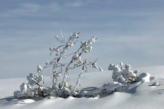 χιονώδεις κλαδίσκοι Στοκ εικόνες με δικαίωμα ελεύθερης χρήσης