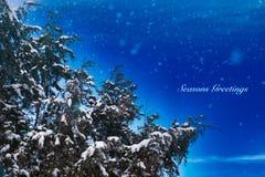 Χιονώδεις χαιρετισμοί εποχών ιουνιπέρων στοκ φωτογραφία με δικαίωμα ελεύθερης χρήσης