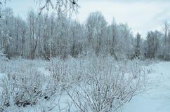 Χιονώδες άσπρο δασικό τοπίο Prestine μετά από το hoarfrost Στοκ φωτογραφία με δικαίωμα ελεύθερης χρήσης