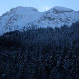 Χιονώδες αλπικό δάσος πεύκων στοκ εικόνες με δικαίωμα ελεύθερης χρήσης