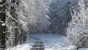 Χιονώδες δάσος οδικών γουρνών κομητειών φιλμ μικρού μήκους