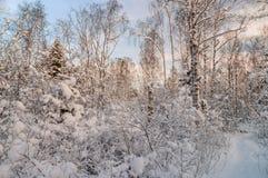 Χιονώδες δάσος στο φως ηλιοβασιλέματος Στοκ φωτογραφία με δικαίωμα ελεύθερης χρήσης