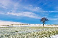 χιονώδες δέντρο πεδίων Στοκ Εικόνα