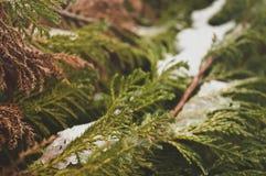 χιονώδες δέντρο Στοκ Εικόνα