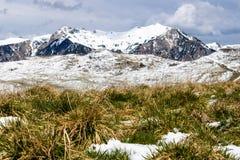 Χιονώδες ειδυλλιακό πανόραμα βουνών με την ανάπτυξη χλόης στο πρώτο πλάνο - εικόνα στοκ φωτογραφία με δικαίωμα ελεύθερης χρήσης