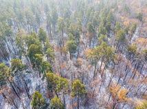 Χιονώδες και παγωμένο χειμερινό δάσος Στοκ Φωτογραφία