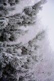 Χιονώδες ξύλο Στοκ φωτογραφία με δικαίωμα ελεύθερης χρήσης