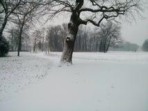 Χιονώδες πάρκο Sanssouci στοκ εικόνα