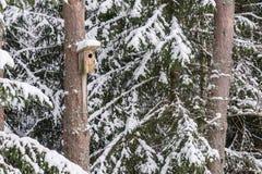 Χιονώδες σπίτι πουλιών σε ένα δέντρο πεύκων Ξύλινο κλουβί της ξυλείας Κιβώτιο φωλιών στο δάσος, Στοκ Φωτογραφία