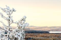 Χιονώδες τοπίο με το δέντρο έλατου που καλύπτεται με το χιόνι Χειμερινό υπόβαθρο με το διάστημα αντιγράφων στοκ εικόνες