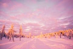 Χιονώδες τοπίο, ρόδινα ελαφριά, παγωμένα δέντρα ηλιοβασιλέματος το χειμώνα σε Saariselka, Lapland Φινλανδία Στοκ Εικόνες