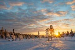 Χιονώδες τοπίο στο ηλιοβασίλεμα, παγωμένα δέντρα το χειμώνα σε Saariselka, Lapland Φινλανδία στοκ φωτογραφίες