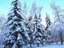 Χιονώδες υπόβαθρο δέντρων και πεύκων με το μπλε ουρανό Χειμερινό δασικό τοπίο με το χιόνι Στοκ Εικόνα