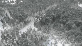 Χιονώδης δασική, εναέρια άποψη χειμερινών πεύκων με τον κηφήνα απόθεμα βίντεο