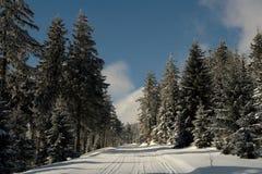 Χιονώδης δασική πορεία Στοκ φωτογραφία με δικαίωμα ελεύθερης χρήσης
