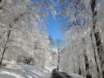 Χιονώδης δασικός δρόμος Στοκ Φωτογραφία