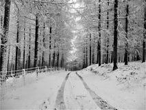 Χιονώδης διαδρομή μέσω της δασώδους περιοχής στοκ εικόνα