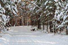 Χιονώδης δρόμος το χειμώνα Στοκ Εικόνα
