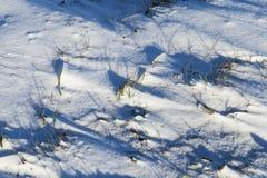 Χιονώδης επιφάνεια, χειμώνας Στοκ Εικόνες