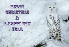 χιονώδης ζωολογικός κήπος της Πράγας κουκουβαγιών στοκ φωτογραφίες με δικαίωμα ελεύθερης χρήσης