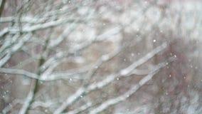 χιονώδης ημέρα Μειωμένο χιόνι έξω από το παράθυρο ενάντια σε ένα θολωμένο δέντρο απόθεμα βίντεο