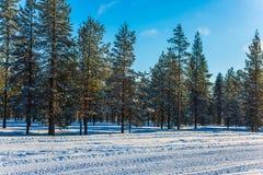 Χιονώδης ημέρα των Χριστουγέννων Στοκ εικόνες με δικαίωμα ελεύθερης χρήσης