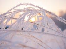 Χιονώδης κλάδος στο χειμερινό πάρκο στο ηλιοβασίλεμα Κινηματογράφηση σε πρώτο πλάνο Στοκ φωτογραφία με δικαίωμα ελεύθερης χρήσης
